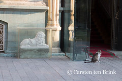 In Tehran's Sa'ad Abad Museum Complex (10b travelling) Tags: museum cat persian asia asien iran lion middleeast persia asie iranian tehran 2014 saadabad neareast moyenorient darban naherosten mittlererosten tenbrink carstentenbrink westernasia iptcbasic 10btravelling