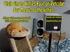 Come say meow to the kitties! (youtube.com/utahactor) Tags: camera cats money dogs mackerel ginger photo video kitten play tech tabby watch kitty talk security visit save boredom record laser gata remote athena share android app hear listen iphone excerise petcube