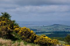 Gorse View (warth man) Tags: landscape spring view gorse southlakeland nikon70300mmvr d7000