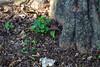 Al Pie (José Ramón de Lothlórien) Tags: naturaleza verde nature shamrock chapultepec trebol treboles mèxico ciudaddemèxico shamrockhunt