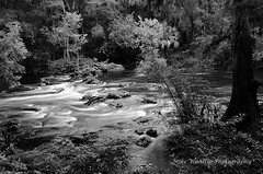 Hillsborough River State Park (Mike Woodfin) Tags: park blackandwhite bw nature water contrast photoshop canon river tampa photography photo nikon pretty fuji tampabay florida photos picture highcontrast photograph fl crusty hillsborough hillsboroughcounty mikewoodfin mikewoodfinphotography