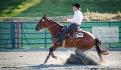 ARCHA Willow Brook 6-26-2016-9 (Webbed Foot Photo) Tags: horses horse pennsylvania archa webbedfootphotography willowbrookfarms pentaxk1 darrenolsen dtolsen webbedfootphoto