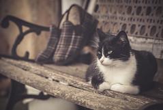 waiting (tmuriel67) Tags: gato cat mascota pet 85mm18 nikon flickr