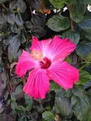 #plants #pretty #plant #leaves #flowerbed #flower #smallplants #colorful #nature (Jordon Papanier) Tags: plants plant flower nature leaves colorful pretty flowerbed smallplants