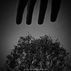 Tree / Fingers (aus.photo) Tags: park blackandwhite bw tree monochrome gum blackwhite hand fingers australia human naturereserve canberra eucalyptus gumtree vignette act cbr australiancapitalterritory coolemanridgenaturereserve coolemanridge ausphoto