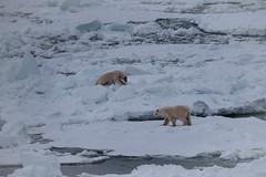 P1110790 (TallGrass-IA) Tags: snow nature norway lumix panasonic svalbard arctic micro g6 43 linblad 1235 expeditions mirrorless