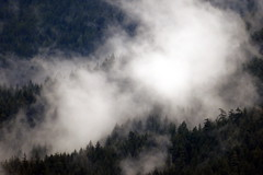 Cloud Catching (Dru!) Tags: trees mist canada rain fog clouds forest island rainforest bc britishcolumbia howesound sunshinecoast gambier bcbritishcolumbia treesinmist occultprecipitation