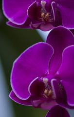 web1311_BOTANIAN-124 (JP Korpi-Vartiainen) Tags: city november autumn winter fall nature colors finland garden scenery colorful greenhouse tropical talvi maisema joensuu syksy luonto puutarha kaupunki pohjoiskarjala keltainen marraskuu botania talvipuutarha aurinkoinen kasvihuone trooppinen jpko vriks