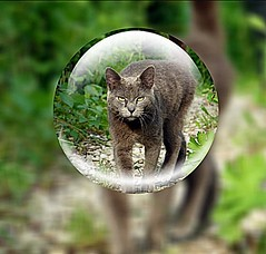 2016-06-30 Prince in crystal ball (april-mo) Tags: ball crystalball crystalballphotography sphere cat chat katz round