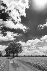 Not yet summer (frank_w_aus_l) Tags: summer bw sun tree nature monochrome de landscape deutschland oak nikon solitude wideangle nordrheinwestfalen beams dorsten netb d7000