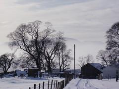 Snow at Ribblehead