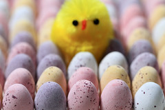 Which Came First? 100/366 ([inFocus]) Tags: macro chicken yellow canon easter bokeh year egg shell 100mm 7d eggs 365 cadburys speckled pun 2012 minieggs 366 project366