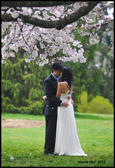 Holding My Love In The Rain of Blossoms - Cherry Queen Elizabeth Park N8843e (Harris Hui (in search of light)) Tags: park wedding canada love vancouver cherry nikon dof bc cloudy candid blossoms 85mm overcast romance richmond lovers ro