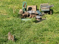 Out-Numbered (mcnod) Tags: squirrel pigeon feeder stump april ferndale 2012 rockdove mcod