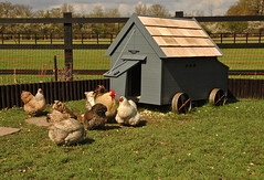The Babington Hen House (Sparrow & Finch) Tags: house chicken finch sparrow coop hen babington