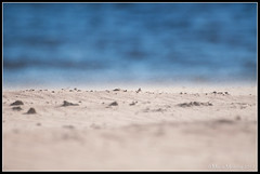 Flying Sand (mmoborg) Tags: landscape flying spring sand wind sweden sverige vår vind landskap flygande mmoborg mariamoborg thepinnacle20120429