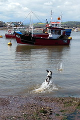 Fetch (JimBobWill) Tags: dog water ball harbour fetching teignmouth fetches