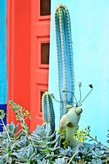 Cactus Creature (xTexAnne) Tags: door blue arizona cactus orange green architecture tucson barrio downtowntucson d7000 nikond7000 diannewhite