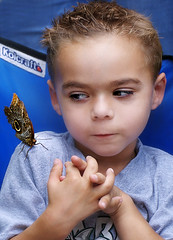 Tell You A Secret (fotoJENica) Tags: me butterfly insect wings colorful child secret stop shoulder landed suspicious bugging suspicions