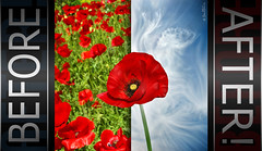 Before/After - Teaser (Ben Heine) Tags: sky music flower art clouds contrast photography video flickr photographer creative before poppy photoediting after digitalcamera postproduction teaser tutorial imageediting beforeafter coquelicot postprocessing boosting youtube benheine