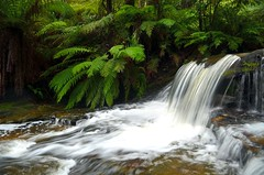 Leura Cascades (VernsPics) Tags: park blue mountains cold fern green water creek flow waterfall moving movement slow walk release scenic hike national cascades nsw shutter flowing feeling wilderness ferns timer cascade leura streem worldtrekker