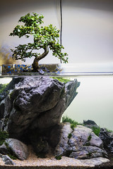 Use your imagination (Filipe Oliveira (FAAO)) Tags: cliff aquarium bonsai 60l plantedaquarium elos aquascaping faao filipeoliveira