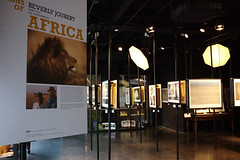 Visions of Africa (wildlifefilms) Tags: africa london photography regentstreet exhibition ng nationalgeographic nationalgeographicstore nationalgeographicgallery visionsofafrica dereckjoubert beverlyjoubert wildlifeconservationfilms dereckandbeverlyjoubert