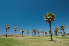 Palmeras balleneras (danimero) Tags: trees summer andaluca day clear cdiz panoramio