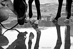 !    (Naif AL-Essa) Tags: horse reflection canon photography eos is photographer 200 7d essa 70 f28    naif  alessa                           alharbi     albishri