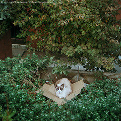 cat_340(concierge) (PyunpyunMaru) Tags: street animals japan cat canon tokyo alley kitten chat downtown snapshot kitty snap gato neko kit katze  oldtown gatto alleycat grimalkin malkin straycat moggy streetcat baudrons mawkin homelesscat  chatsauvage wildekatze gatoselvagem gatosalvaje kittenish smallalley gattoselvatico canoneos5dmarkii