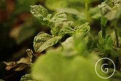 ~ ( u  e e   h) Tags: plant nature