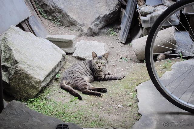 Today's Cat@2012-08-12