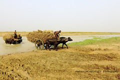 Harvest caring (HamimCHOWDHURY  [Active 01 Feb 2016 ]) Tags: life pink blue red portrait white black green nature yellow canon eos colorful purple faces mark sony gray magenta violet surreal ash dhaka dslr vaio rgb bangladesh ii bangladesh bengal frame incredible gettyimagesbangladeshq2012 01611595036 60d7d5d