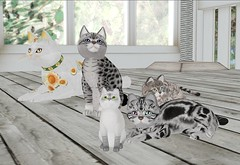 Waiting Too Long ..... (IniaS) Tags: life snow silver tabby sl lilac secondlife second kc bengal ebony lynx kittycats kittycat balinsee ociat primpet
