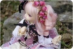 Autumn Rose without Rain ( USAGI ) Tags: lolita bjd f18 volks bittersweet fcs msd sdc dollheart