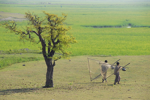 Going fishing in the rice farm, Sunamganj, Bangladesh. Photo by Khaled Sattar, 2007.