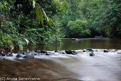 Kudawa River (ArunaSene) Tags: motion nature river landscape flow scenery stream scenic biosphere bio scene snap srilanka scape blurr biodiversity sinharaja kudawa arunaseneviratne arunasene