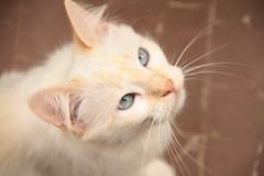hmmmm (deadoll) Tags: cats cute love cat canon fur furry kat feline chat amor adorable kitty kittens 7d gata felinos felino felines neko katze fofo gatto babys gatti pur doof gatas canon7d