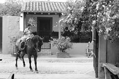 El Baile del Caballito (Digenes ;)) Tags: blanco mxico mexico caballo y negro nio baile bailando montando mejico mesico