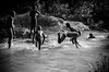 A sparkling choreography (Giovanni Savino Photography) Tags: blackandwhite playing water kids river jumping dominicanrepublic diving choreography magneticart ©giovannisavino