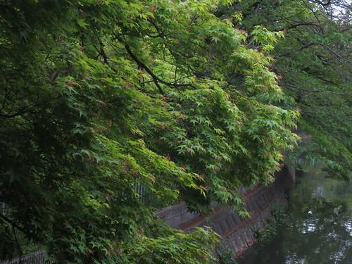 水路の緑木