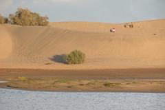 dunas de Maspalomas desde La Charca