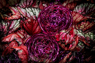 Coleus and wire balls