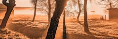 Bright light (Jorden Esser) Tags: trees light mist grass fog sunrise fence shadows brightlight monday tones baretrees sundawn warmcolour cmwd nederlandvandaag