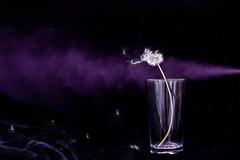 blew me away... #DIY fun (dtapkir) Tags: flower london home glass speed fun diy movement nikon purple air 85mm happiness d750 survival