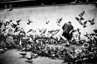 THE PIGEONS WHISPERER