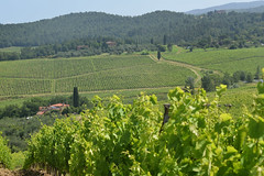 DSC_3869 (erinakirsch) Tags: italy castle landscape florence vineyard view wine vine winery vineyards views tuscany toscana grape grapevine florenceitaly frescobaldi winegrapes nipozzano