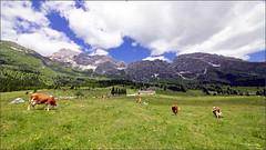 Altopiano del Montasio. (valpil58) Tags: panorama landscape nikon sigma altopiano 1224 friuli d600 montasio