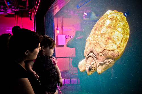"First Turtle Encounter @ FL Aquarium 3.18.12 • <a style=""font-size:0.8em;"" href=""http://www.flickr.com/photos//6858614570/"" target=""_blank"">View on Flickr</a>"