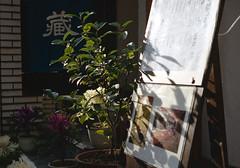 神保町 植木鉢 Chiyoda-ku, Tokyo (ymtrx79g ( Activity stop)) Tags: plant color slr film japan analog tokyo 35mmfilm fujifilm 東京 135 植物 chiyodaku industar jinbocho jimbocho 神保町 写真 千代田区 銀塩 フィルム fujicast801 industar50250mmf35 fujicolor記録用100 201202blog